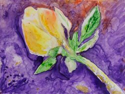 Yellow flower on dramatic background Watercolour on Yupo 9 inch x 12 inch 74 lb